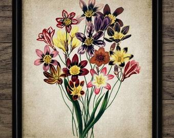 Vintage Flowers Print - Flower Illustration - Flower Decor - Botanical - Digital Art - Printable Art - Single Print #231 - INSTANT DOWNLOAD