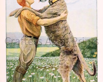 Irish Wolfhound illustration by Louis Agassiz Fuertes from a Vintage 1927 Book Page