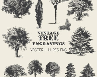 Tree Clipart Vector Pack - Vintage Hand Drawn Tree Engraving Clipart Clip Art PNG & Vector EPS, AI Design Elements Digital Instant Download