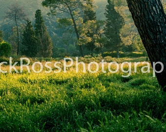 Canvas Print of Sunrise over Meadow