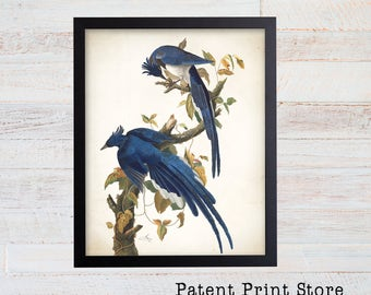 James Audubon Columbia Jay Art Print. Bird Print. Audubon Prints. Bedroom Art. Bird Artwork. Bird Print. Bird Art Print. Audubon Bird Print.
