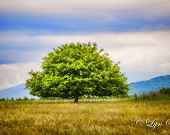 The Lone Tree -  Nature photography, landscape photography, wall art, rustic art, fine art print, tree, new england
