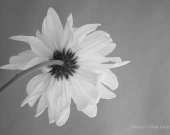 Daisy Print ~ Flower Art ~ Black and White Wall Art ~  Taupe Home Decor ~ Yellow Floral Photography ~ Botanical Print, Dreamy Wall Decor
