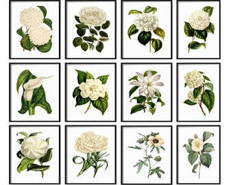 White Botanical Print Set - Botanical Set of 12 Prints - Prints - Vintage Botanical Prints - White Botanical Prints - Wall Art - Home Decor