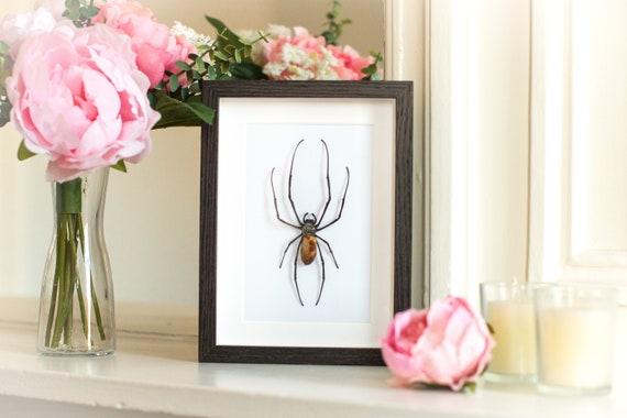 Framed spider Nephila maculata