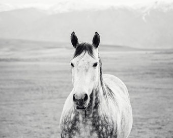Black and White Horse Country Photograph, Equestrian Art, Physical Horse Print