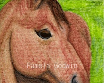 """Horse ACEO Print 2.5"""" x 3.5"""""""