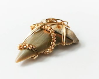 Fossilized Shark Tooth Wire Wrapped Pendant