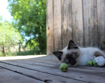 Farm Kitty - Barn Cat Print