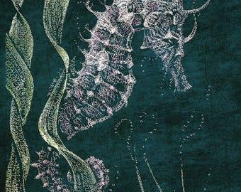Seahorse- 20x24 Canvas Print