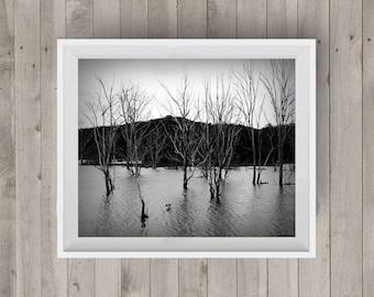 Trees Lake|Black and White Photography|Tree Photo|Photography Art|Digital Image|Downloadable Print|Wall Art|Home Decor|Gift Idea