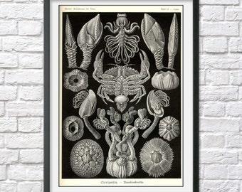 ERNST HAECKEL PRINT Vintage Scientific illustration Coral Nautical antique nature beach house decor wall art print, poster