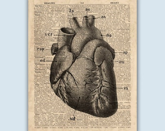 Anatomical Heart Print, Heart Artwork, Educational Posters, Heart Wall Decor, Gift for Doctor, Anatomical Art, Heart Anatomy, Cardiology