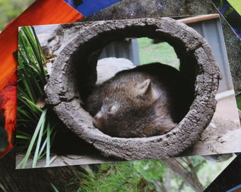 Wombat, Australia Postcard