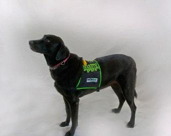 Diabetic Dog Safety Vest and Kit, High Visibility Alert Vest