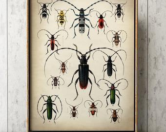 BEETLES POSTER, Beetles Print, Beetles Chart, Insect Poster, Scientific Drawing Print, Natural History Room Decor, Wall Art, Wall Decor