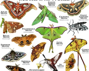 Moths of the World