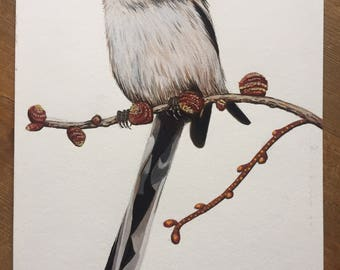 Study of a long tailed tit, original watercolour and gouache painting