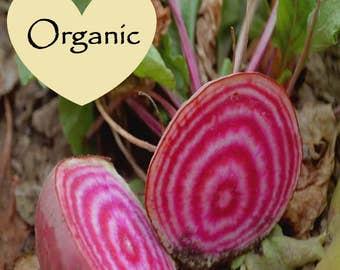 Beet - Chioggia Organic Non-GMO, 55+ Organic seeds, Chioggia Beets, Organic garden Seeds, Vegetable Seeds, Organic gardening seeds