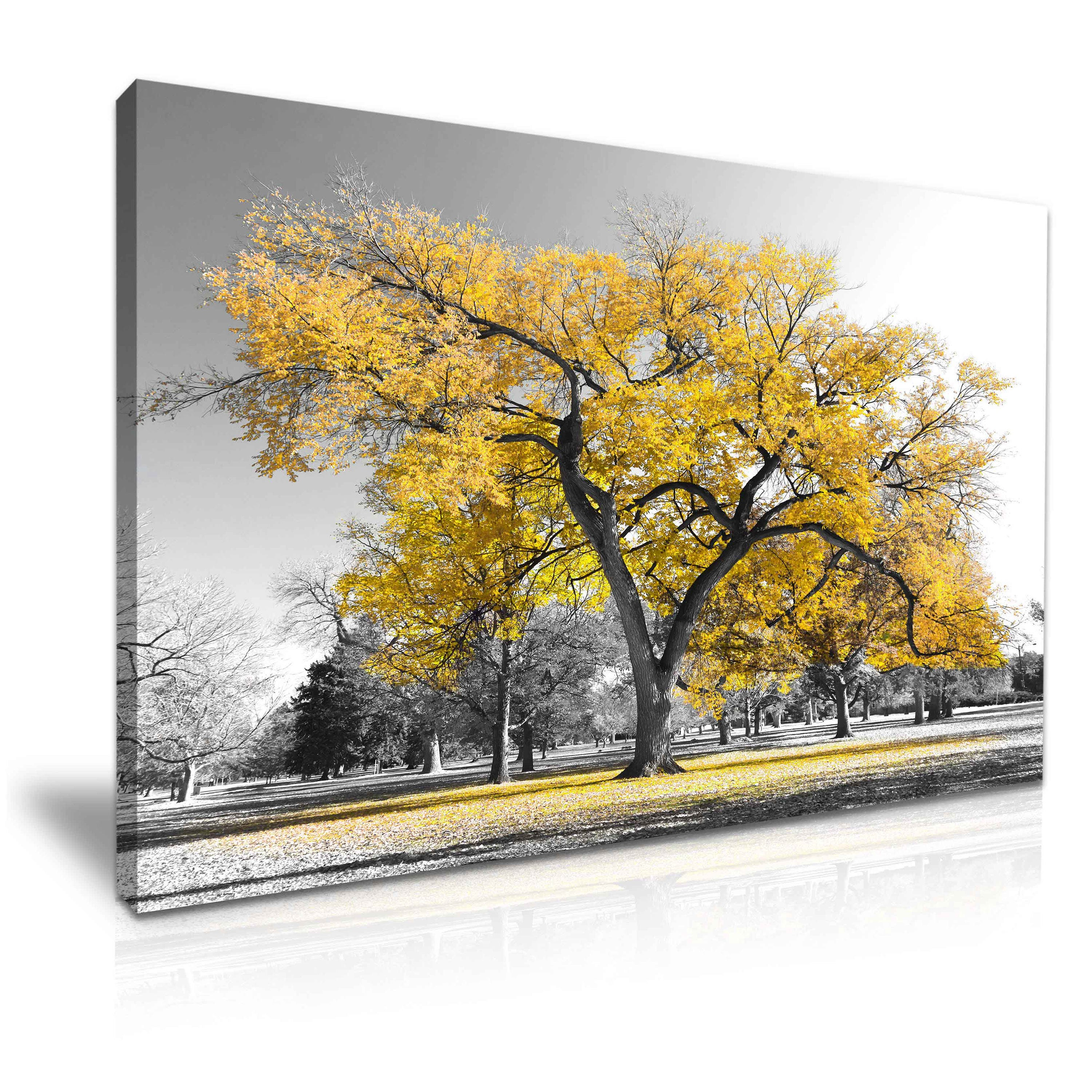 Large Tree Yellow Leaves Nature Canvas Wall Art Picture Print