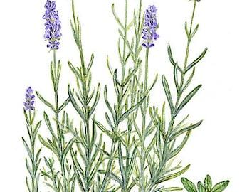 "rich FACIAL CREME ""lavender"" (100 ml / 3.4 oz) for oily skin"