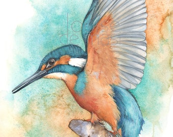 Kingfisher print of watercolor painting A4 size K24517, Kingfisher watercolor painting print, Kingfisher illustration,