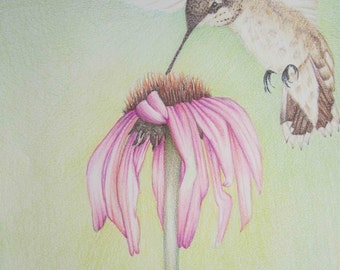 Pencil Art Work Hummingbird and Cone Flower Original Drawing-Print