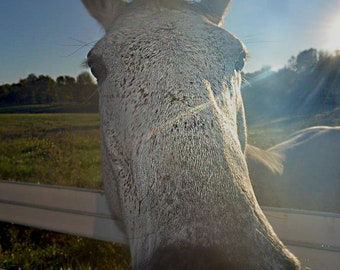 White Horse digital file