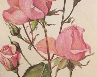 Queen Elizabeth Rose Print