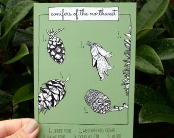 Illustrated Card - Conifers of the Northwest - Blank Card