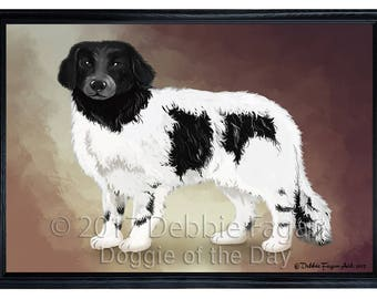 Stabyhoun Dog Framed Canvas Print Wall Art