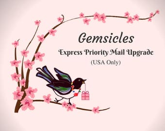EXPRESS Priority Mail Upgrade - U.S.A. Only