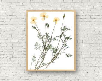 California Poppy Art, Pressed Plant Print, California Gift, California State Flower, Poppy Flower Print, CA State Flower, Botany Lover Gift