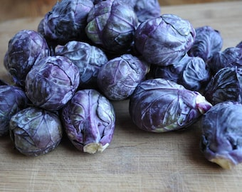Purple Brussels Sprouts 'Falstaff'  25+ seeds
