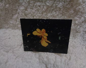 Happy Birthday Greeting Card Yellow Pansy Flower Photography Stationery Artistic Birthday Greeting Note Card