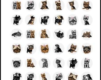 Yorkies Doggies set 1 - 4 digital bottlecap 8.5in x 11in collage sheets {Instant Download}