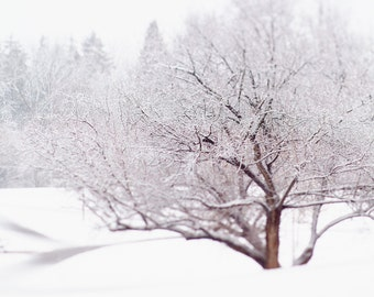 Winter tree art photography. Snow scene landscape photo. Inspiring nature print. Oversized vertical wall art for elegant office decor.