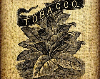 Tobacco Leaves Plant Vintage Digital Image Transfer Download 300 dpi for Pillows Totes Bags Napkins Towels