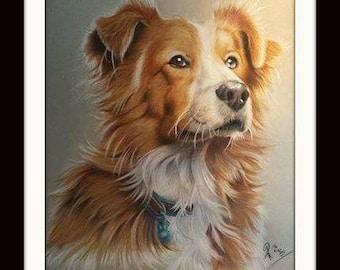 Pet Portraits, family portraits