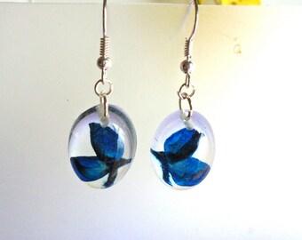 Bluebonnet Resin Real Pressed Flower Texas Jewelry Earrings (E11)