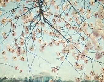 Washington DC Photography, Cherry Blossoms, Jefferson Memorial Landscape, Pale Blue Teal Pink Wall art 8x12