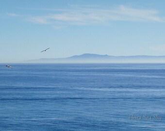 Blue Sea Sky Birds Photo, 5x7, California Beach Photo, Nature Photo