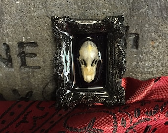 Real Taxidermy Bat Skull, Framed and Resin coated with Metal Stamping Brass Bat Accent