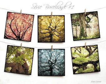Set of six cards postcards 14 x 14 cm - 01 Brocéliande serie
