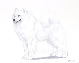 Samoyed Dog - Archival Fine Art Print - AKC Best in Show Champion - Breed Standard - Working Group - Original Art Print
