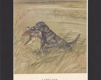 Black Labrador Print George Vernon Stokes  1947 Lab Drawing Mounted with Black Mat Labrador Dog Print Labrador Drawing Stokes Labrador