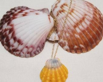 Floating Sunrise Shell Necklace