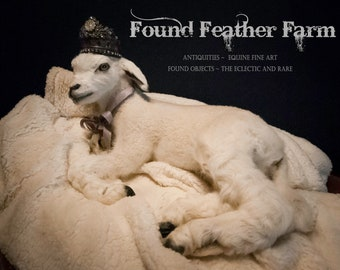 Beyond Adorable Vintage White French Lamb Taxidermy Mount