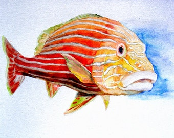 The Red Fish -print from original watercolor painting, Holiday present / birthday present / art collection