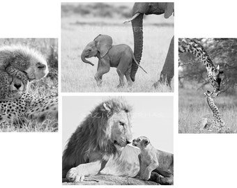 Baby Animal Nursery Art Prints, Set of 4 Black & White Photos, Elephant, Lion, Cheetah, Giraffe, Safari Nursery Art, Animal Nursery Decor